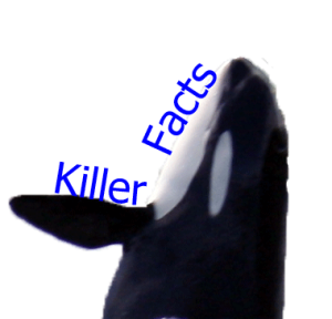 A killer whale labelled 'killer facts' - the first thing I found when searching Google Images for 'Killer Facts'...